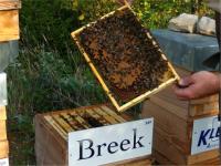 Notre miel arrive !