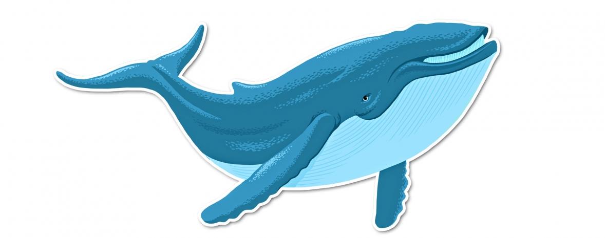 Les animaux de la mer, jeu pédagogique pour enfants (iPhone, iPad, Mac)